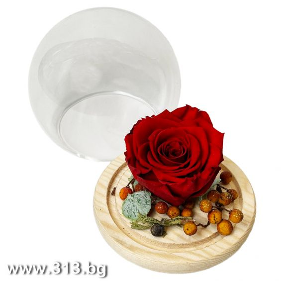 For You Eternal Rose